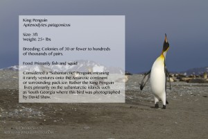 KingPenguin Desktop